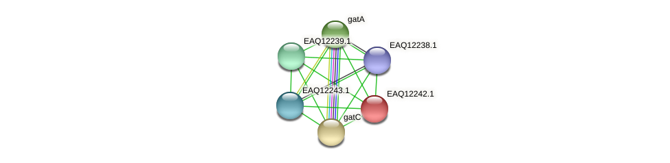 RB2654_08552 protein (Maritimibacter alkaliphilus) - STRING interaction network