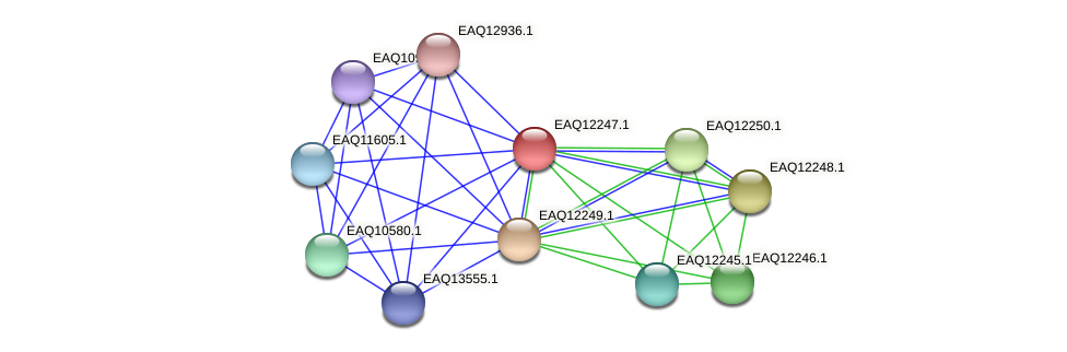 RB2654_08577 protein (Maritimibacter alkaliphilus) - STRING interaction network