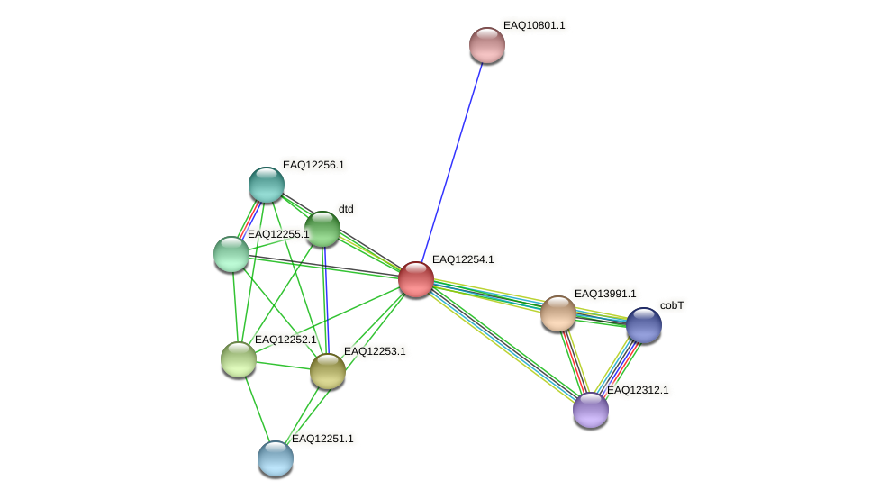RB2654_08612 protein (Maritimibacter alkaliphilus) - STRING interaction network
