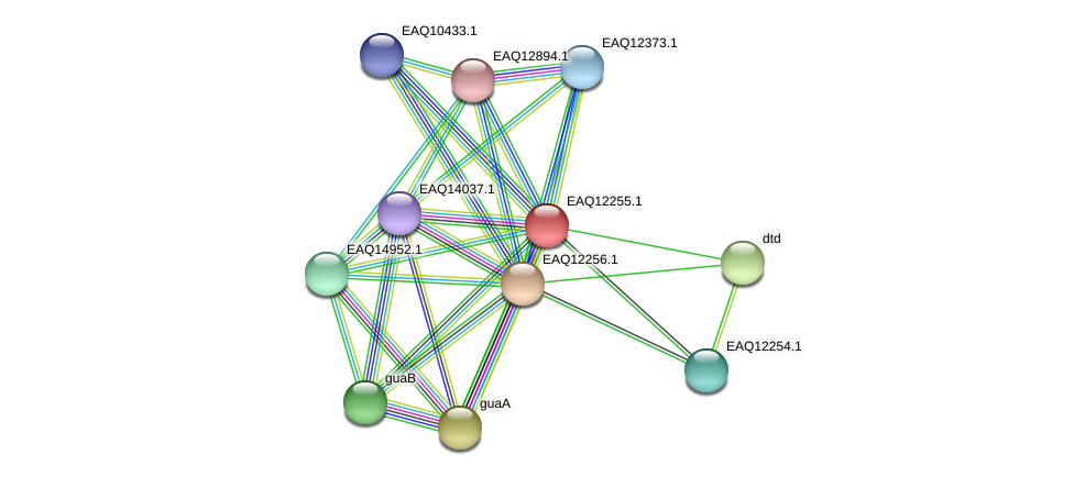 RB2654_08617 protein (Maritimibacter alkaliphilus) - STRING interaction network
