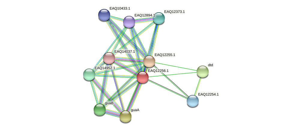 RB2654_08622 protein (Maritimibacter alkaliphilus) - STRING interaction network