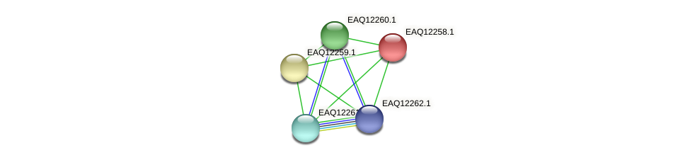 RB2654_08632 protein (Maritimibacter alkaliphilus) - STRING interaction network
