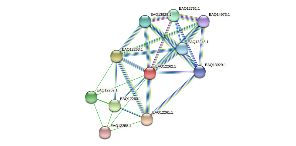 RB2654_08652 protein (Maritimibacter alkaliphilus) - STRING interaction network
