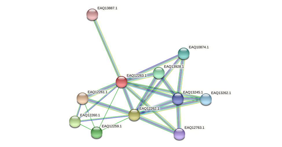 RB2654_08657 protein (Maritimibacter alkaliphilus) - STRING interaction network