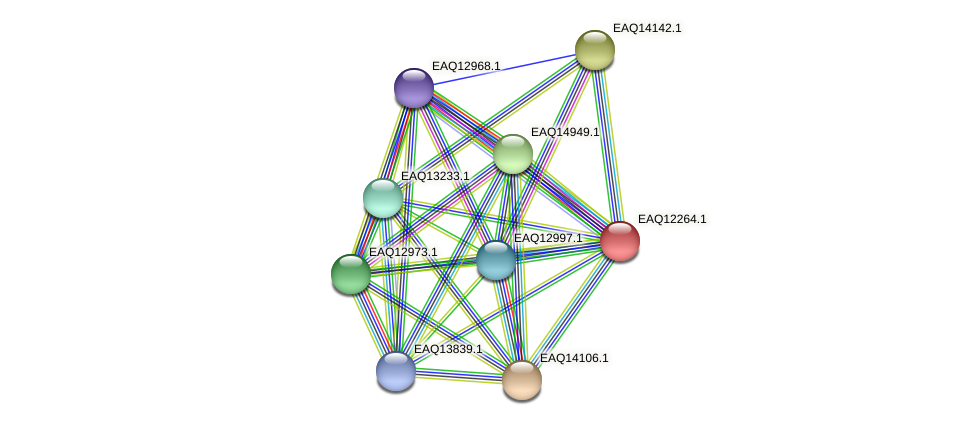 RB2654_08662 protein (Maritimibacter alkaliphilus) - STRING interaction network