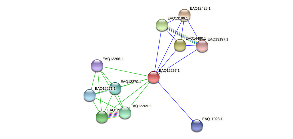 RB2654_08677 protein (Maritimibacter alkaliphilus) - STRING interaction network