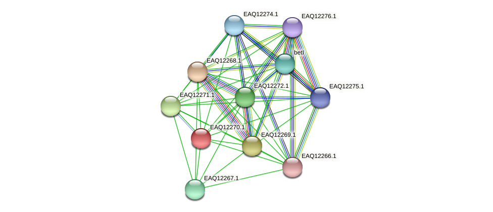 RB2654_08692 protein (Maritimibacter alkaliphilus) - STRING interaction network