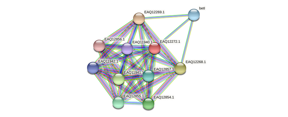 RB2654_08702 protein (Maritimibacter alkaliphilus) - STRING interaction network