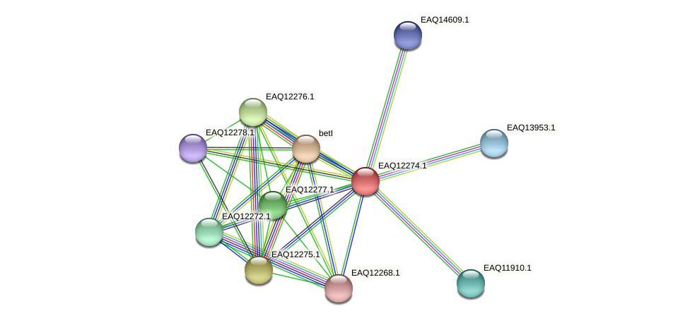 RB2654_08712 protein (Maritimibacter alkaliphilus) - STRING interaction network