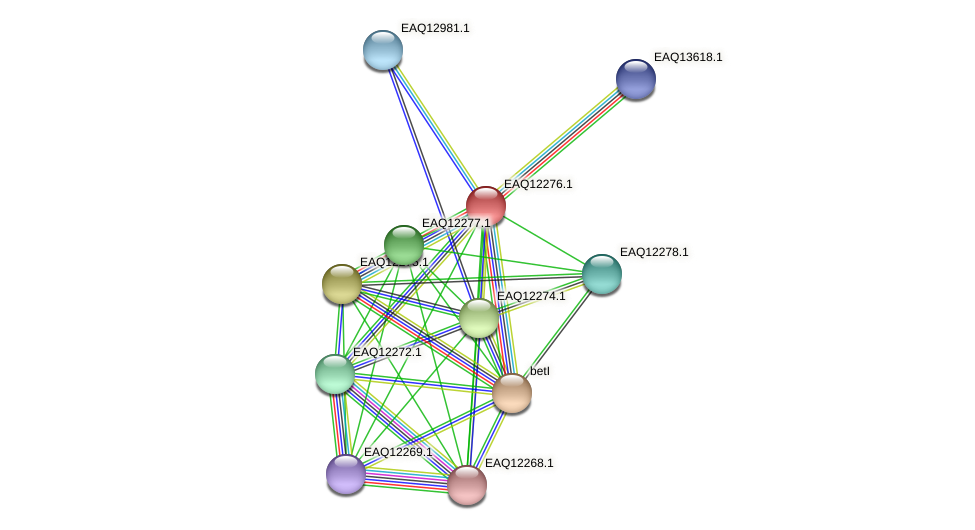 RB2654_08722 protein (Maritimibacter alkaliphilus) - STRING interaction network