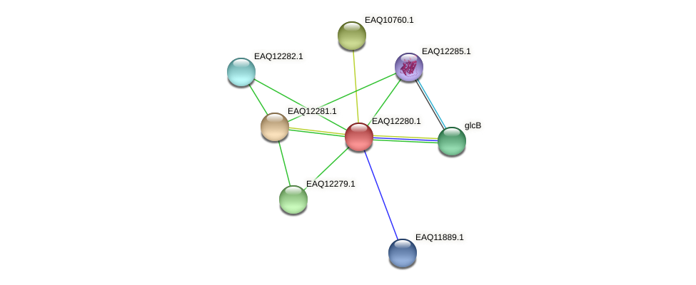RB2654_08742 protein (Maritimibacter alkaliphilus) - STRING interaction network