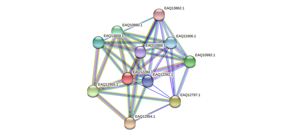 RB2654_08762 protein (Maritimibacter alkaliphilus) - STRING interaction network