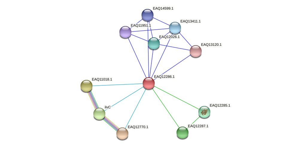 RB2654_08772 protein (Maritimibacter alkaliphilus) - STRING interaction network