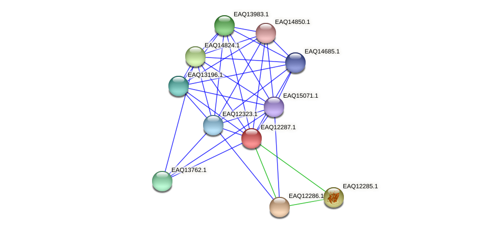 RB2654_08777 protein (Maritimibacter alkaliphilus) - STRING interaction network