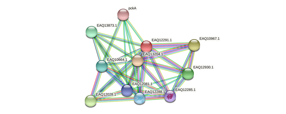 RB2654_08797 protein (Maritimibacter alkaliphilus) - STRING interaction network