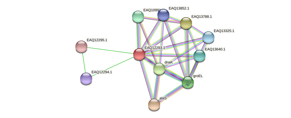 RB2654_08807 protein (Maritimibacter alkaliphilus) - STRING interaction network