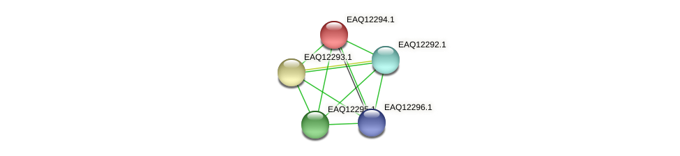 RB2654_08812 protein (Maritimibacter alkaliphilus) - STRING interaction network
