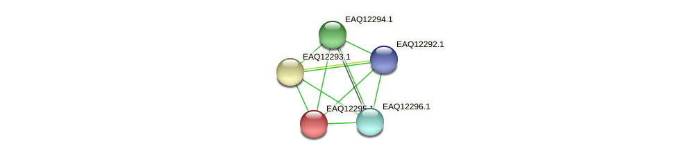 RB2654_08817 protein (Maritimibacter alkaliphilus) - STRING interaction network
