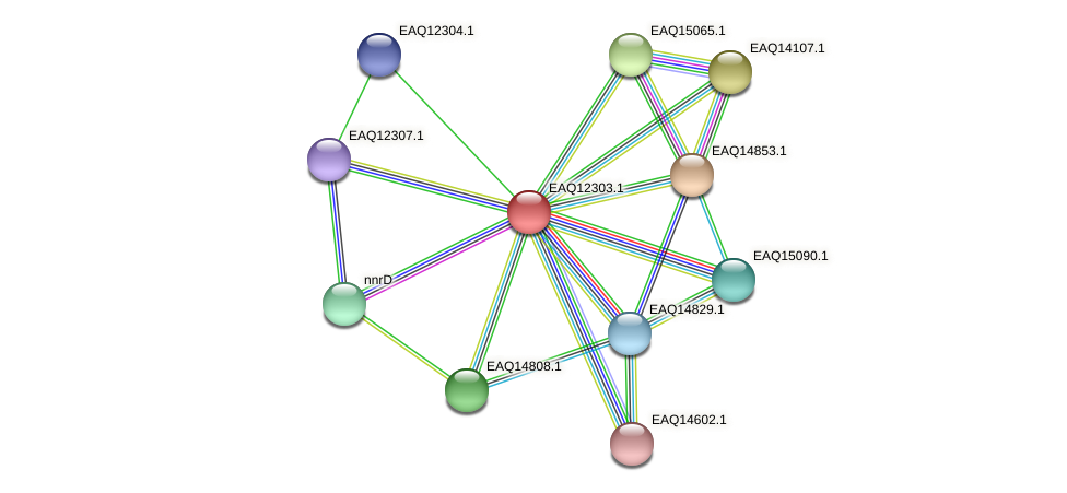 RB2654_08857 protein (Maritimibacter alkaliphilus) - STRING interaction network