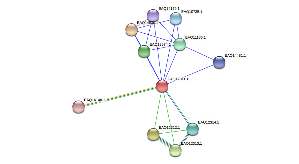 RB2654_08897 protein (Maritimibacter alkaliphilus) - STRING interaction network