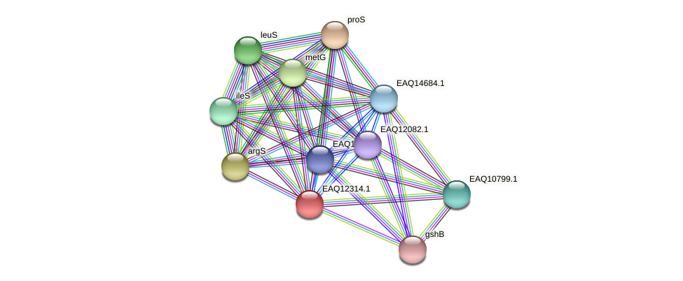 RB2654_08912 protein (Maritimibacter alkaliphilus) - STRING interaction network