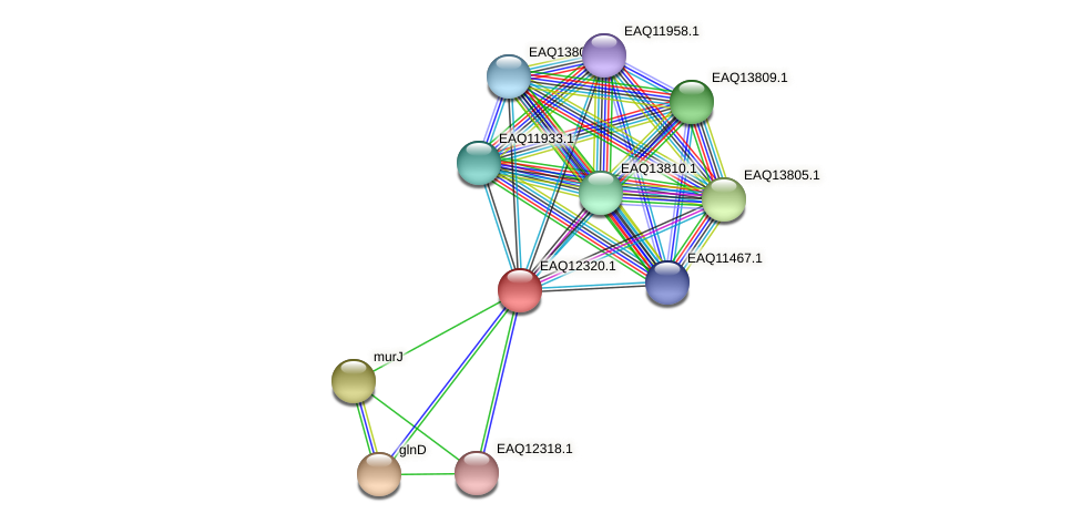 RB2654_08942 protein (Maritimibacter alkaliphilus) - STRING interaction network