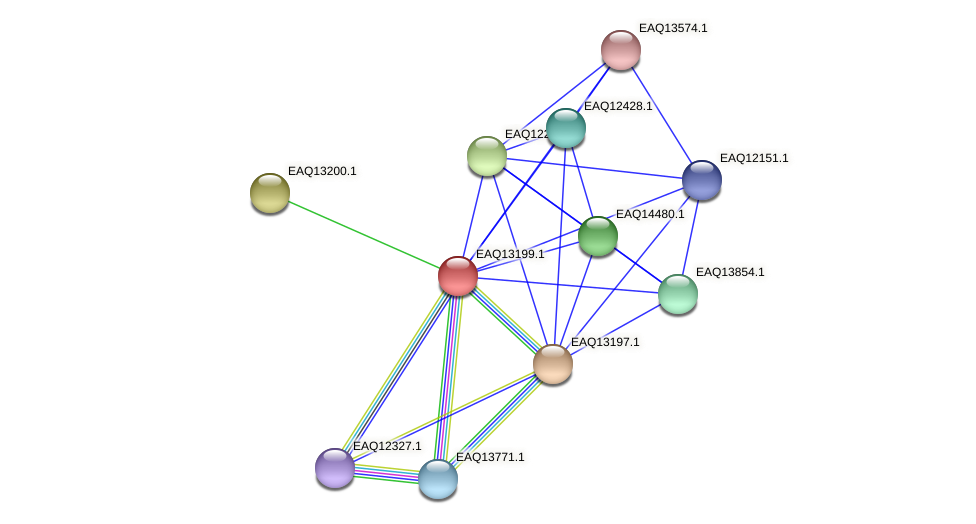 RB2654_09024 protein (Maritimibacter alkaliphilus) - STRING interaction network