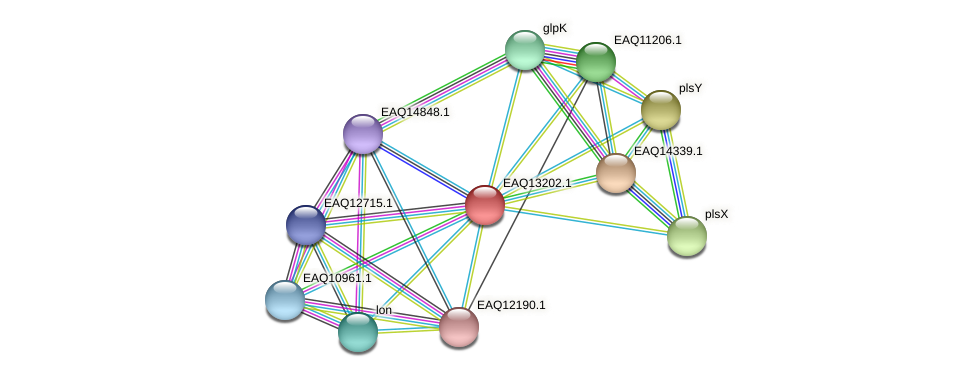 RB2654_09039 protein (Maritimibacter alkaliphilus) - STRING interaction network