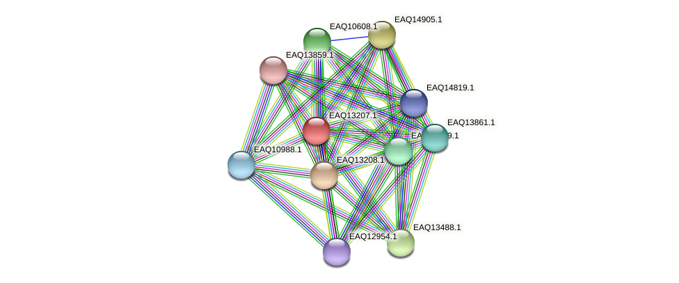 RB2654_09064 protein (Maritimibacter alkaliphilus) - STRING interaction network