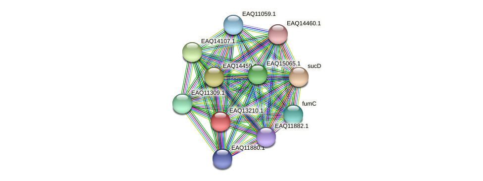 RB2654_09079 protein (Maritimibacter alkaliphilus) - STRING interaction network