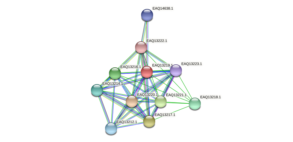 RB2654_09124 protein (Maritimibacter alkaliphilus) - STRING interaction network