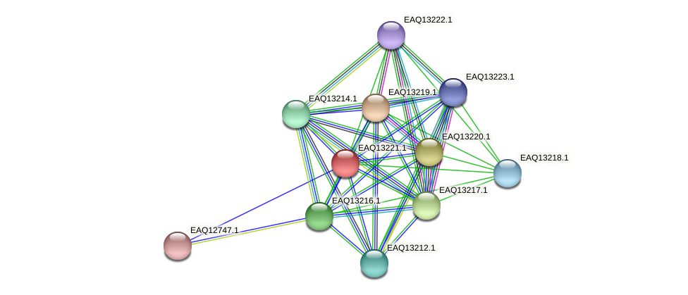 RB2654_09134 protein (Maritimibacter alkaliphilus) - STRING interaction network