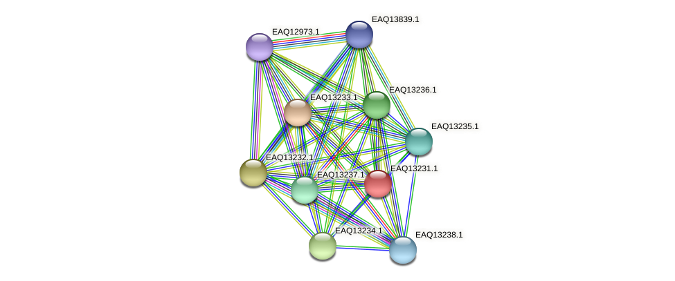 RB2654_09184 protein (Maritimibacter alkaliphilus) - STRING interaction network