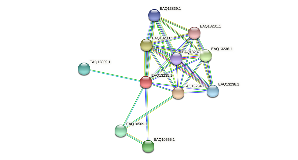 RB2654_09204 protein (Maritimibacter alkaliphilus) - STRING interaction network