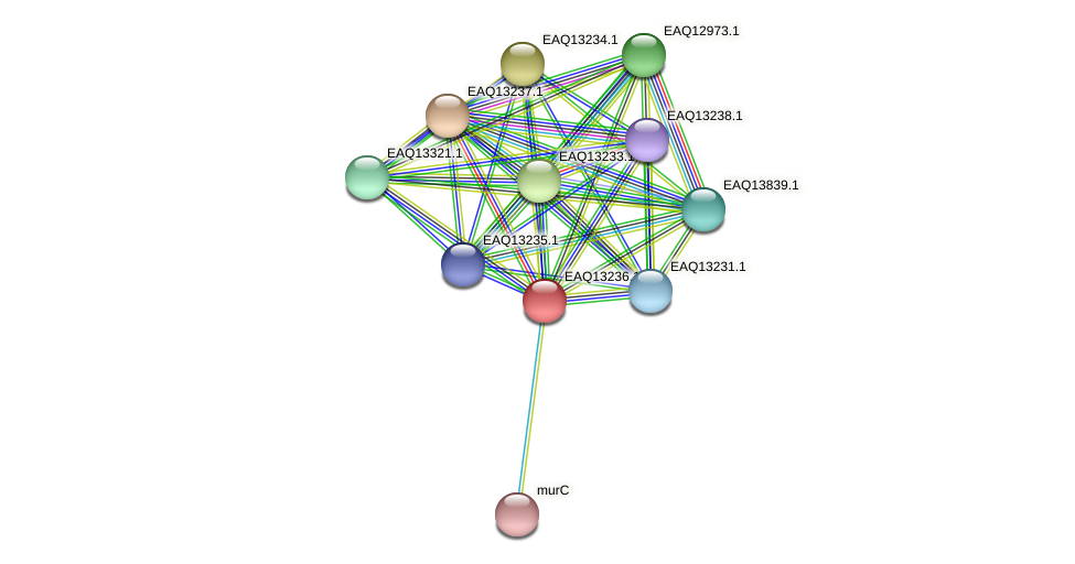 RB2654_09209 protein (Maritimibacter alkaliphilus) - STRING interaction network