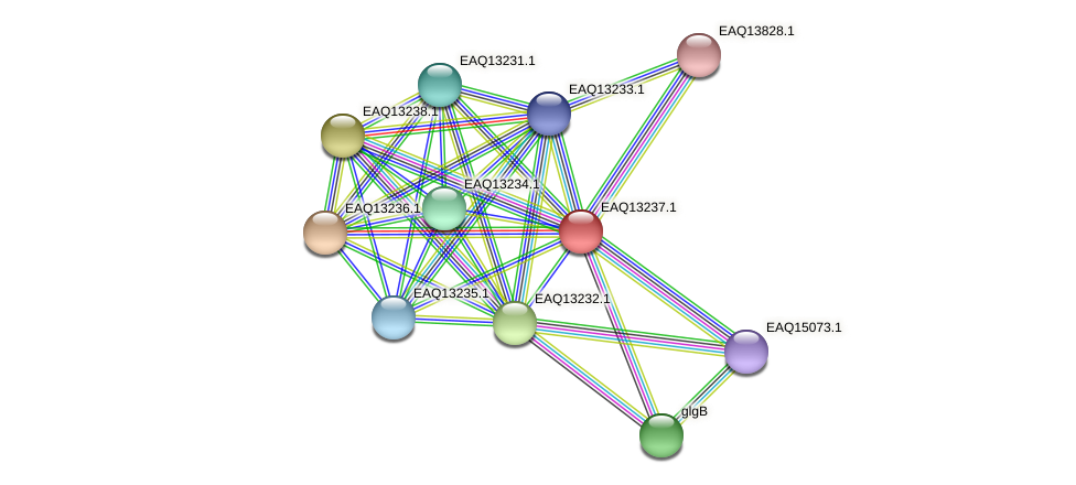 RB2654_09214 protein (Maritimibacter alkaliphilus) - STRING interaction network