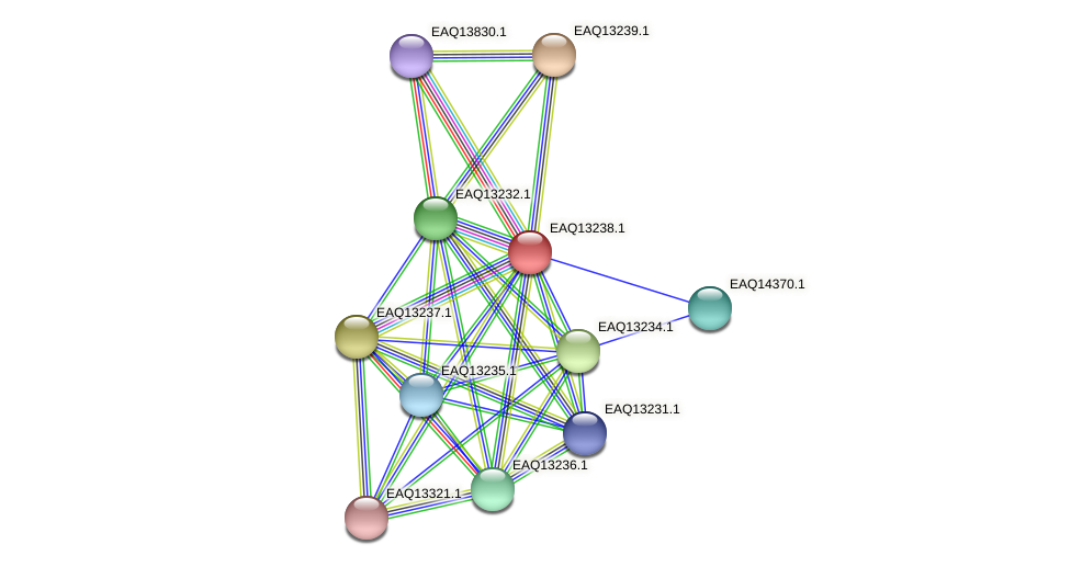 RB2654_09219 protein (Maritimibacter alkaliphilus) - STRING interaction network