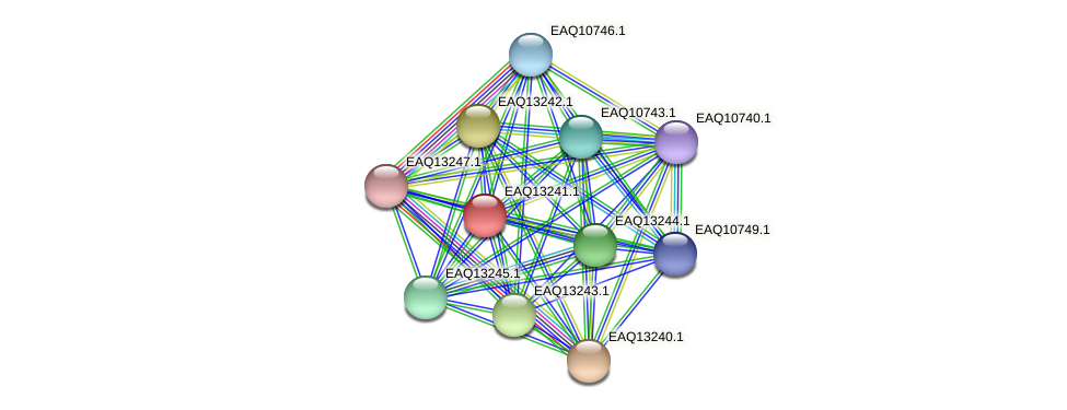 RB2654_09234 protein (Maritimibacter alkaliphilus) - STRING interaction network