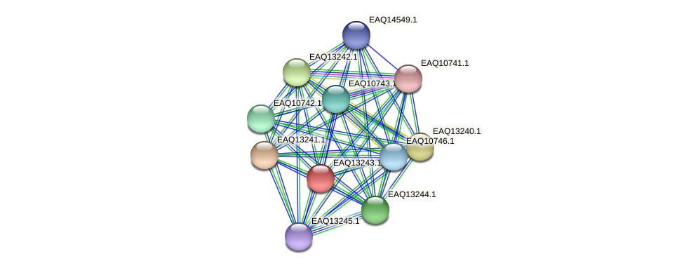RB2654_09244 protein (Maritimibacter alkaliphilus) - STRING interaction network