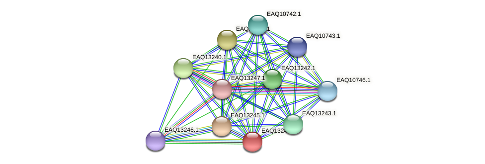 RB2654_09249 protein (Maritimibacter alkaliphilus) - STRING interaction network