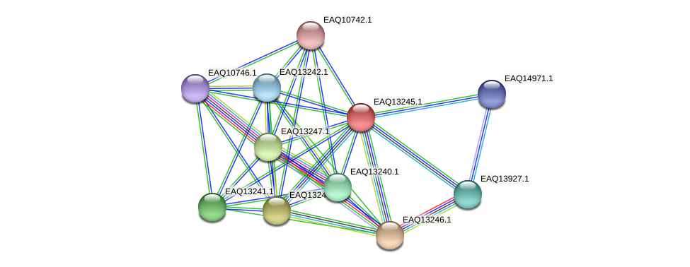 RB2654_09254 protein (Maritimibacter alkaliphilus) - STRING interaction network