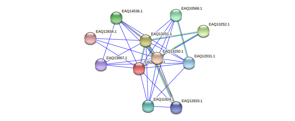 RB2654_09274 protein (Maritimibacter alkaliphilus) - STRING interaction network