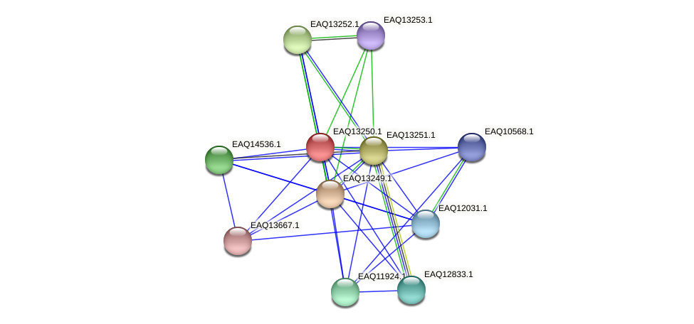 RB2654_09279 protein (Maritimibacter alkaliphilus) - STRING interaction network