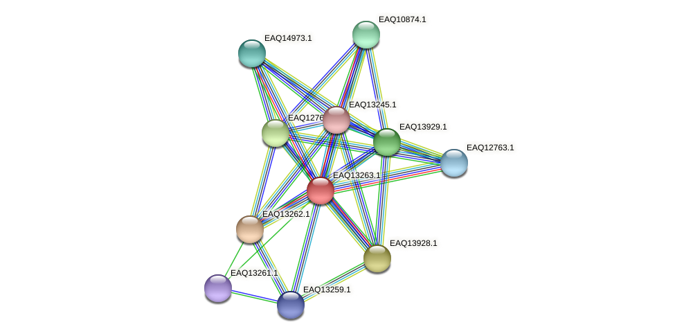 RB2654_09344 protein (Maritimibacter alkaliphilus) - STRING interaction network