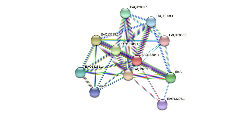 RB2654_09449 protein (Maritimibacter alkaliphilus) - STRING interaction network