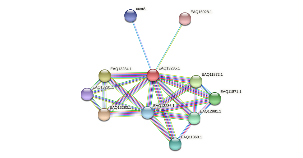 RB2654_09454 protein (Maritimibacter alkaliphilus) - STRING interaction network