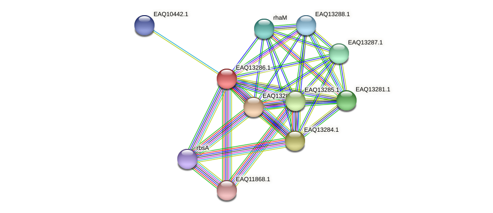 RB2654_09459 protein (Maritimibacter alkaliphilus) - STRING interaction network