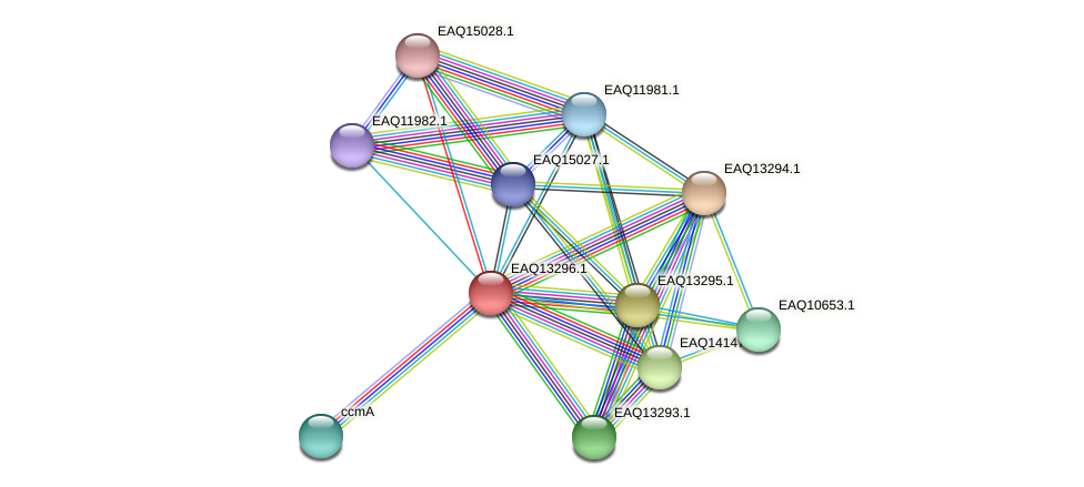 RB2654_09509 protein (Maritimibacter alkaliphilus) - STRING interaction network