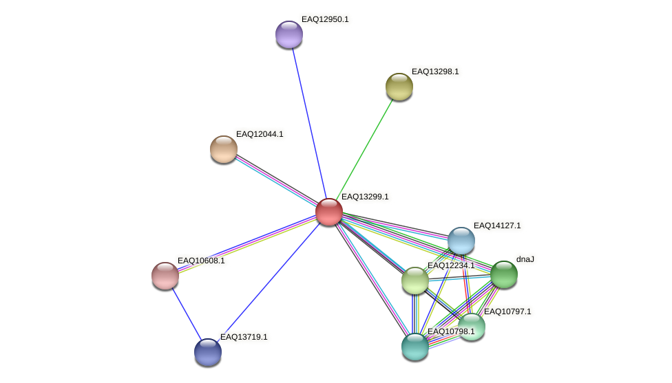 RB2654_09524 protein (Maritimibacter alkaliphilus) - STRING interaction network