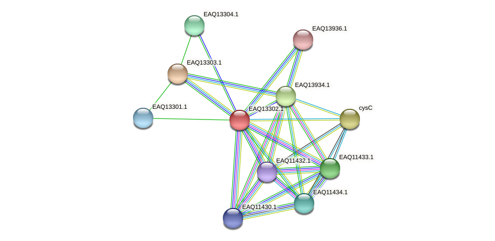 RB2654_09539 protein (Maritimibacter alkaliphilus) - STRING interaction network